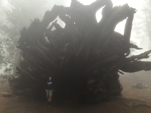 Thats a big tree